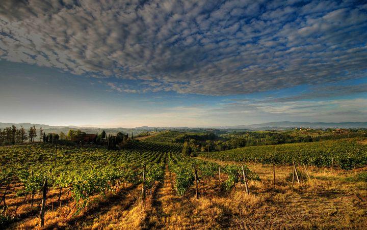Italian vineyards in Tuscany
